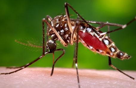 En verano…instala mosquiteras en tu casa
