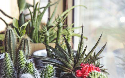 Ideas para decorar el hogar con plantas y flores